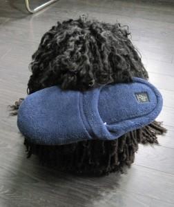 Puli, Bojtár, fetch slipper