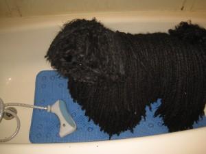 Mojo in the tub